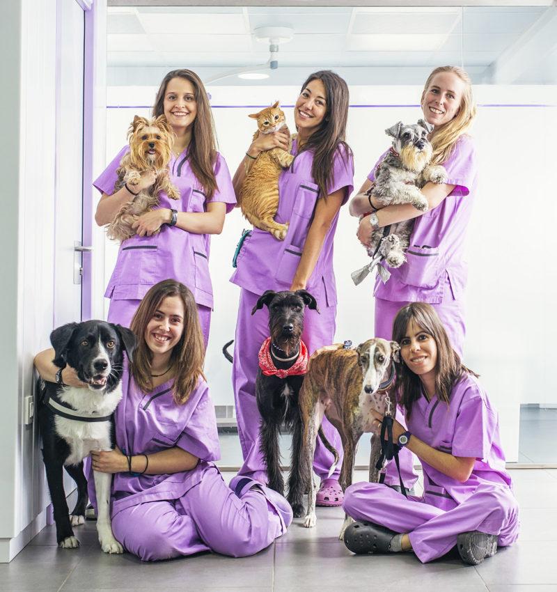 Cheerful women team veterinary holding her pets. Veterinary Concept.